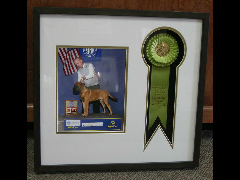 Dog Show Ribbon